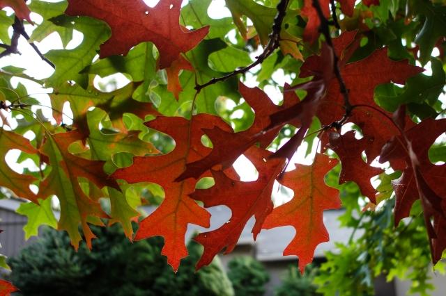 20141018 Fall Colors DSC-RX100 10.4-37.1 mm f-1.8-4.9 DSC03718