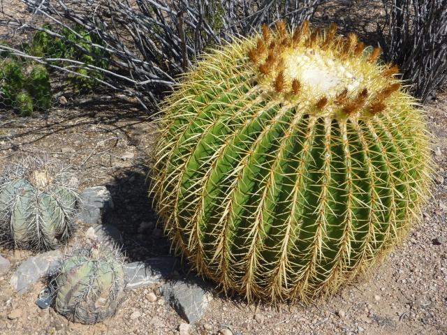 Desert Botanical Garden, Phoenix, AZ