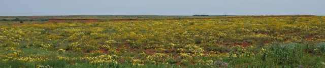 Oklahoma prairie in springtime banner photo