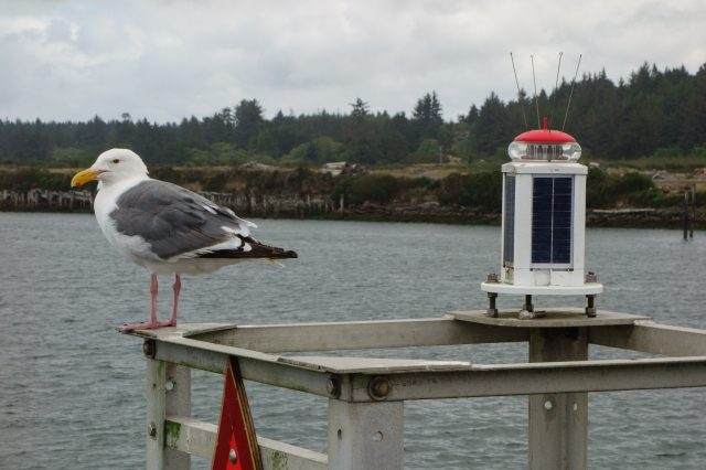 Seagull and thingamajig at the coast in Bandon, Oregon
