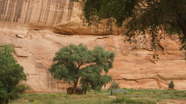 Small lodging shaded by tree at Canyon De Chelly