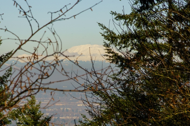 Mt St. Helens peaking between the trees - from the Pittock Mansion