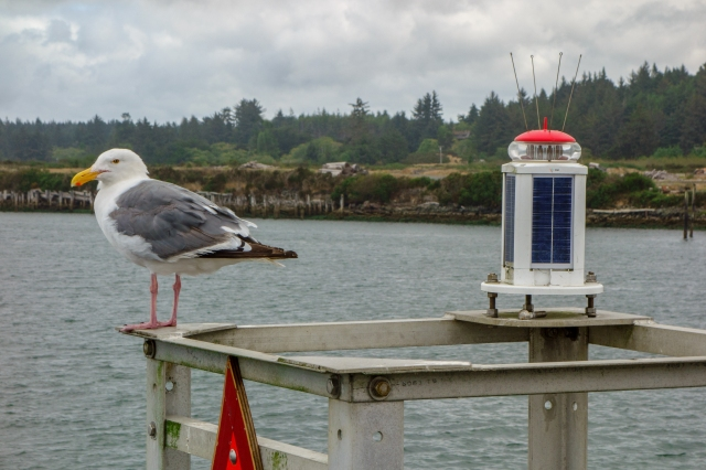 20150820 CoosBay Bandon and Florence SONY DSC-RX100 28-100mm F1.8-4.9 DSC05135-Edit